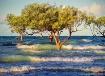 Mangroves awash!