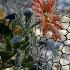 © Fax Sinclair PhotoID # 15049976: Frozen Flower