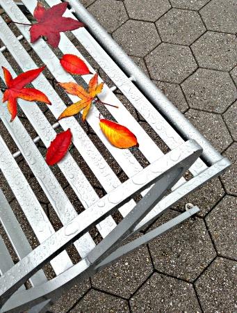 Leaves fallen on bench