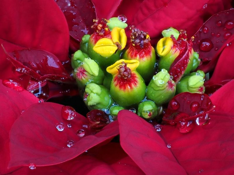 The Colors of Christmas - ID: 15057700 © Greg McCroskery