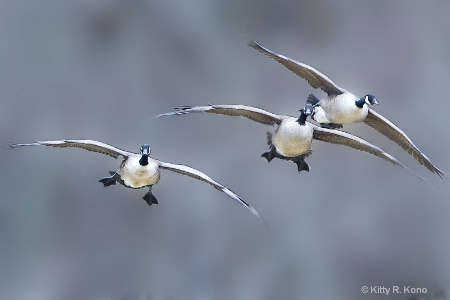 Fat Boys Coming in for a Landing