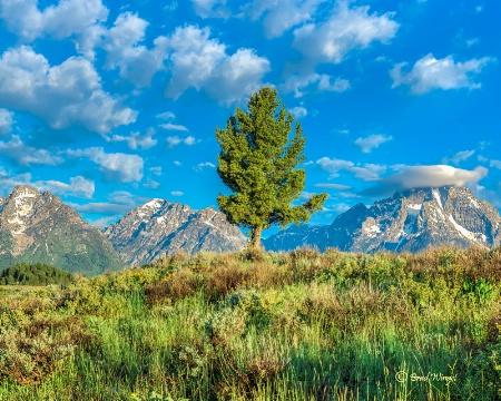 Lone Tree Meadow