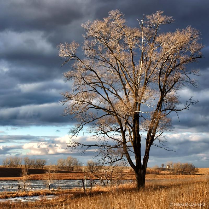 Tree At Walnut Creek Lake