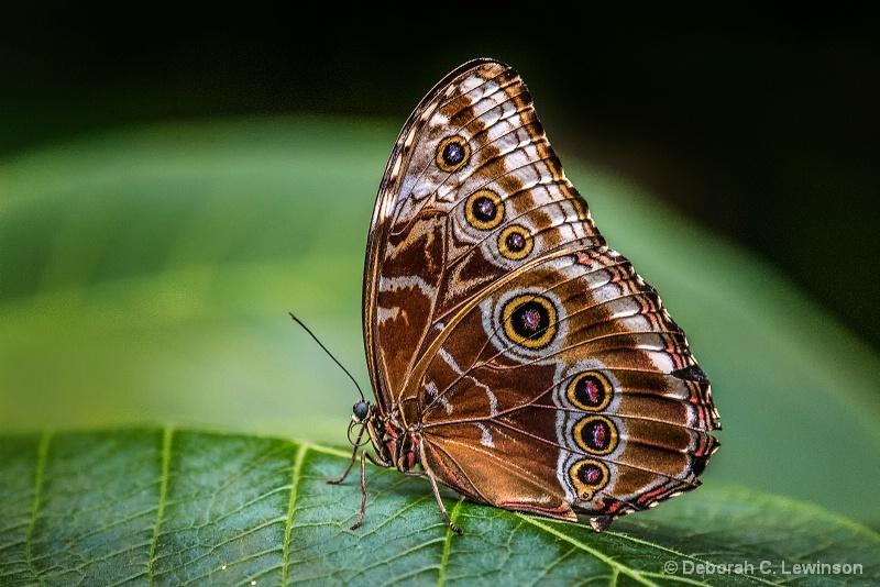 Gotta Love Butterflies!
