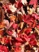 Seasonal Quilt
