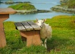 Do ewe want this ...