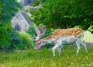 Derbyshire deer