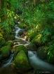 Hawaii Botanical ...