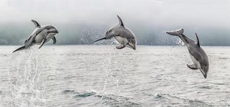 Jumping Wild Dolphin  512789
