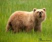 Grizzley Cub
