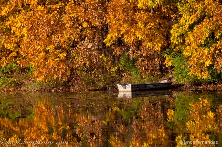 Boat with Leaves