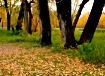 """Autumn Leave..."