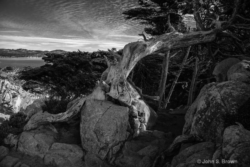 point lobos--2 - ID: 15083563 © John S. Brown