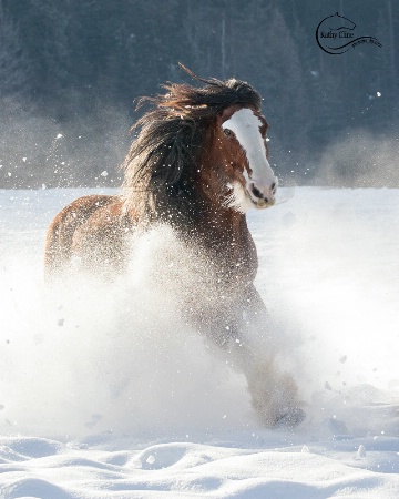 Winter Clydesdale