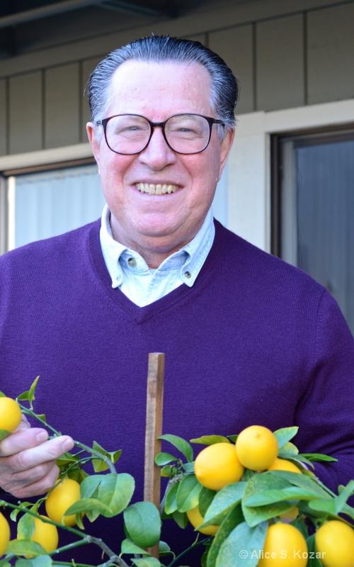 Jack Harvesting Meyer Lemons - ID: 15087270 © Alice Kozar