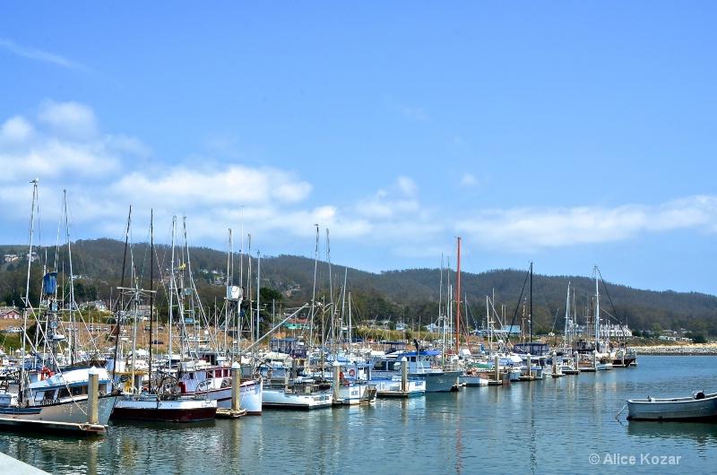 Harbor Fleet Half Moon Bay - ID: 15087500 © Alice Kozar