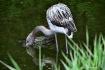The Cautious Bird