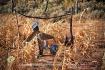Zuni Scarecrow