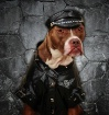 Axel the Gangster