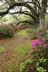 a spring path