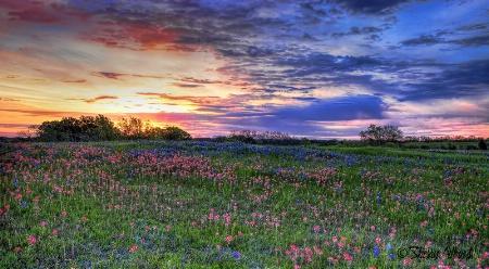 Sunrise and bluebonnets