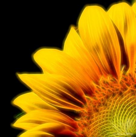 Electrify Sunflower