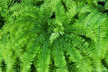 Cascade of Green