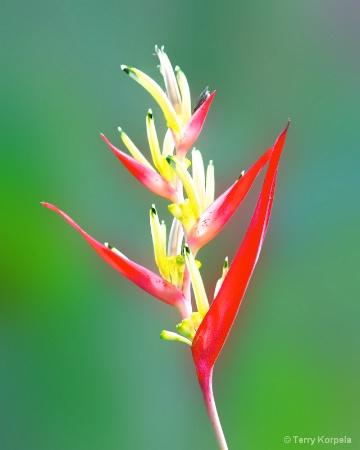 Flower from a botanical garden in Tortola