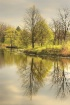 Spring Reflection...