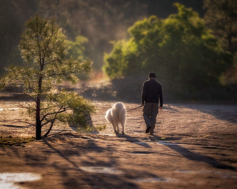 Best Buds Out for an Early Morning Walk
