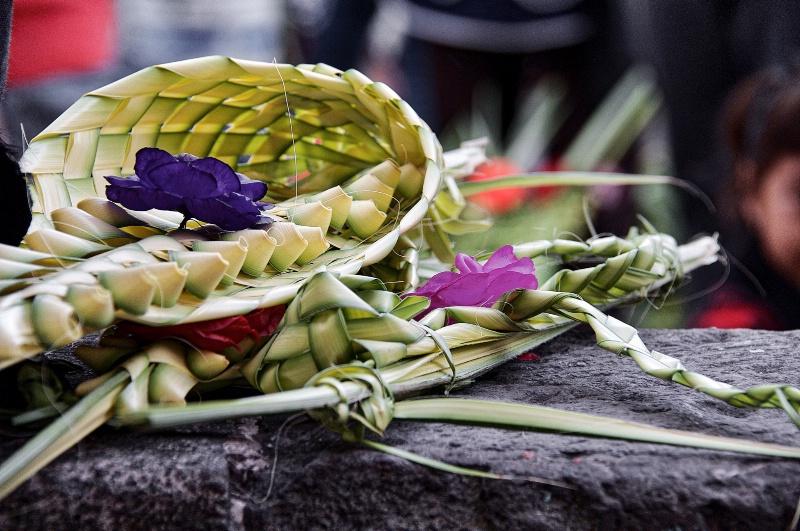 Riffs of Palm  - ID: 15131036 © David Resnikoff