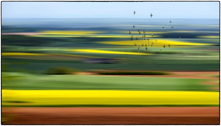 Springtime flight