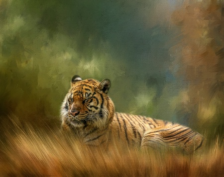 Photography Contest Grand Prize Winner - May 2016: Sleeping Tiger