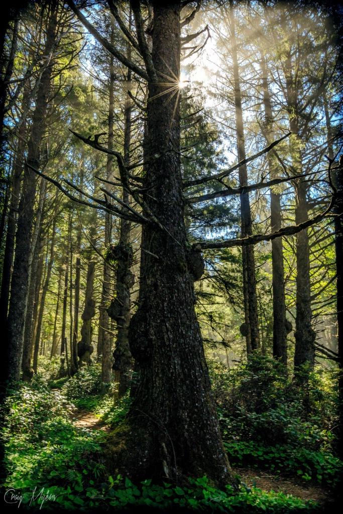 On the Spruce Burl Trail - ID: 15147482 © Craig W. Myers