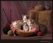 Knittin' Kitt...