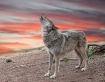 One Last Howl