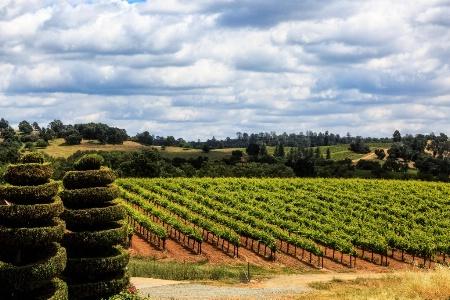 Topiary & Vineyards