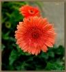 Lovely Flower...