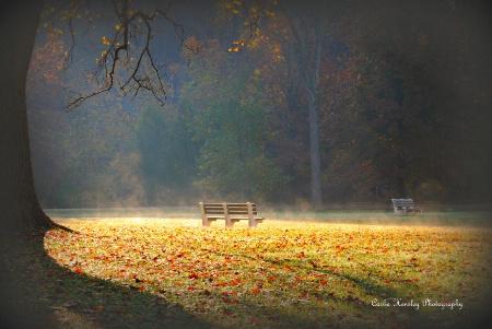 Peaceful Morning Mist