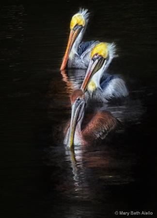 Pelicans Un, Deux, Trois