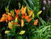 Garden Show Beaut...