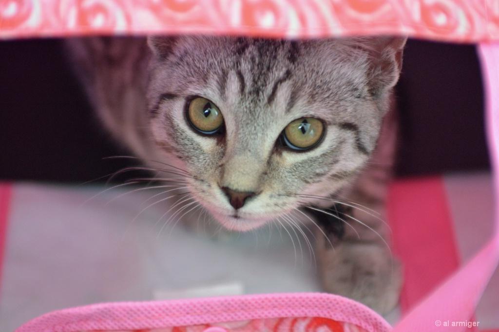 Cat in the bag DSC 3984 - ID: 15165840 © al armiger