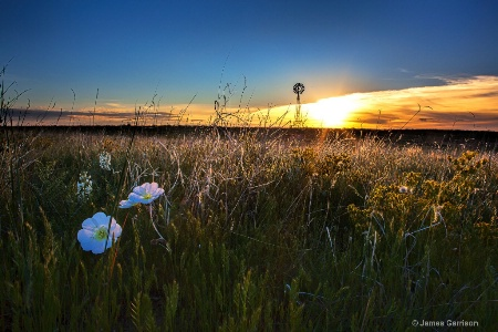 Morning on the Grasslands