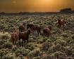 Wild horses at su...