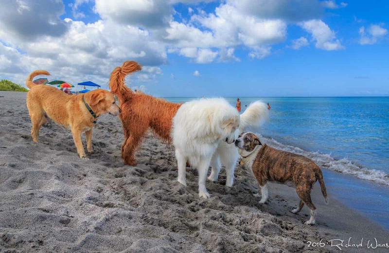 A Dogs Day at the Beach - ID: 15169698 © Richard M. Waas