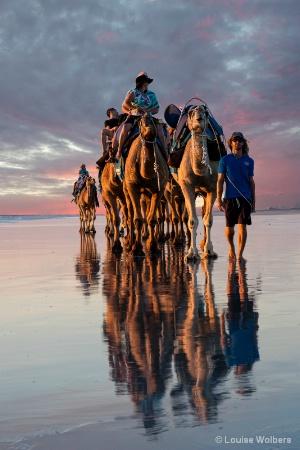 Pink Sunset Camel Ride