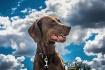 Zuska in the Sky....