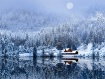 A Foggy Winter Ni...