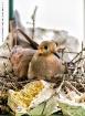 Nesting Amongst t...