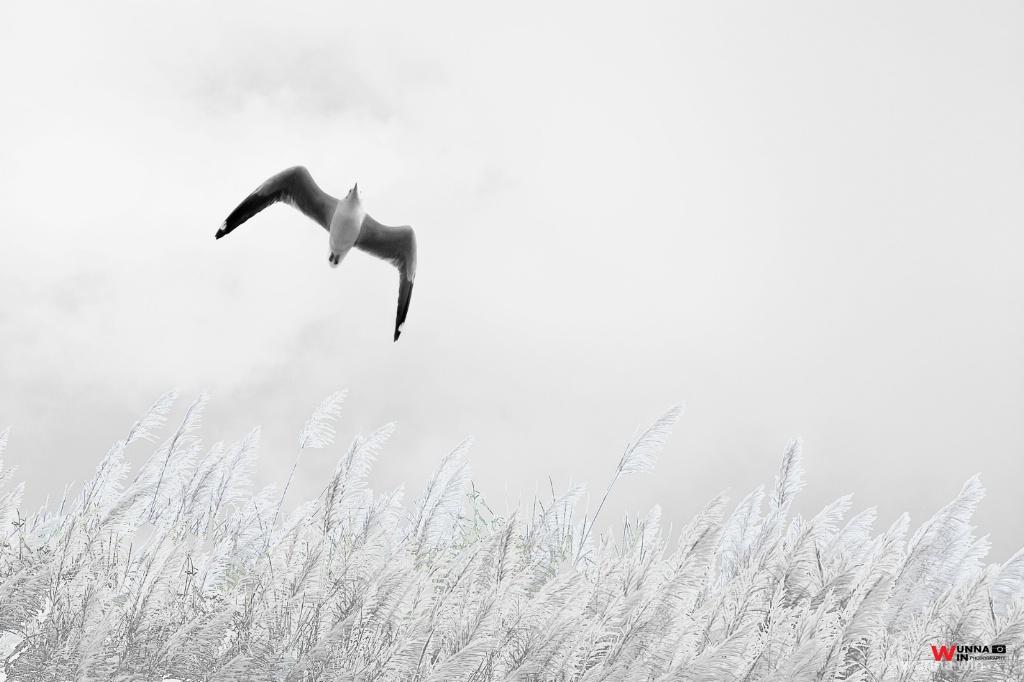 flying freely